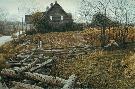 Robert Bateman Pheasants at Dusk