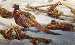 Robert Bateman Pheasant in the Cornfield