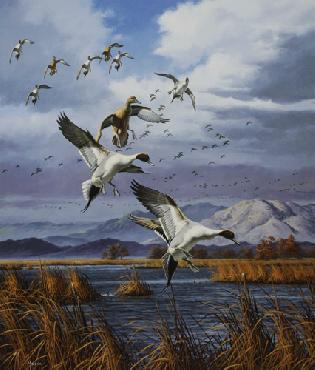 David Maass Pintails Pacific Flyway Artist