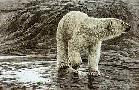 Robert Bateman Polar Bear