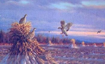 Owen Gromme Prairie Chickens in Winter Artist