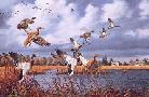 David Maass Prairie Marsh Mallards