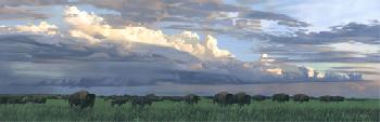 Joshua Spies Prairie Thunder - Buffalo Giclee on Canvas