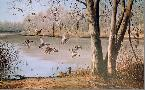Maynard Reece Quiet Pond - Mallards