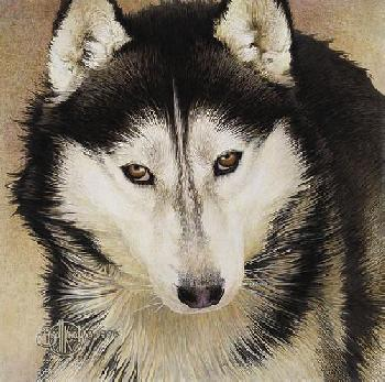 Scott Kennedy Quiet Time Companions - Siberian Husky
