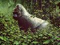 Bradley Parrish Rainforest Prince