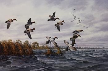 David Maass Redhead Bay