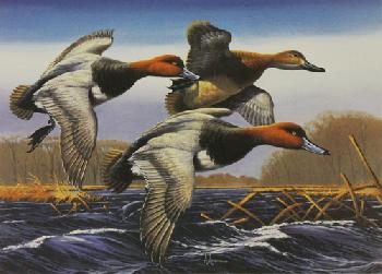 Arthur Anderson Redheads 1987 Federal Duck Stamp Print Medallion Edition
