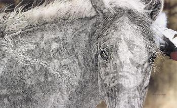 Judy Larson Red Horse