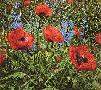 Peter Ellenshaw Red Poppies