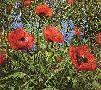 Peter Ellenshaw Red Poppies
