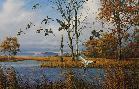 David Maass River Flats - Pintails