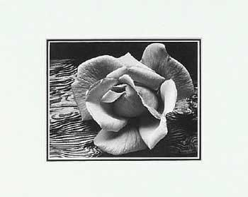 Ansel Adams Rose and Driftwood SM Matted