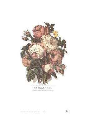Currier and Ives Roses of May
