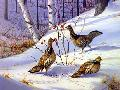 Owen Gromme Ruffed Grouse - Hollyberries