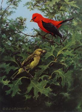 Owen Gromme Scarlet Tanagers