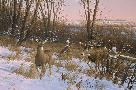 Michael Sieve Second Season - Whitetail Deer