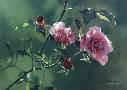 Terry Isaac Shades Of Summer Rufous Hummingbird