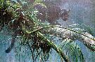 Robert Bateman Shadow of the Rainforest