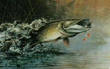 Scott Zoellick Shallow Water Muskie