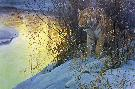 Robert Bateman Siberian Tiger