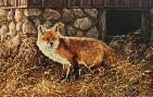 Rosemary Millette Silent Hunter - Red Fox