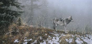 Stephen Lyman Silent Snows