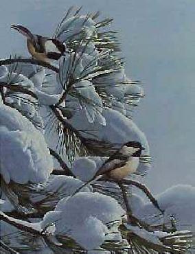 Ron Parker Snow on Pine Chickadee