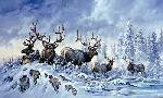Larry Fanning Solstice Rendezvous - Elk