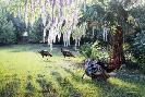 Jim Kasper Southern Charms - Osceola Wild Turkeys