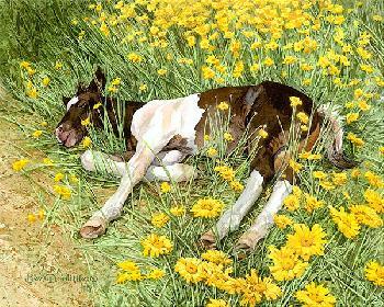 Bev Doolittle Spring Break Giclee on Paper