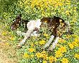 Bev Doolittle Spring Break