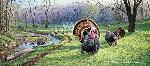 Jim Kasper Spring Fed - Wild Turkeys