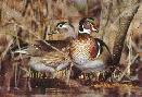 Scott Nielsen Springtime Wood Ducks