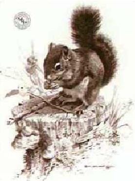 Carl Brenders Squirrel