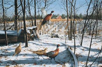 David Maass Startled Ringnecks - Pheasants