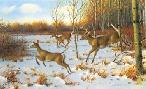 Owen Gromme Startled Trio - Whitetail Deer