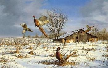 David Maass Stone Barn Pheasants Artist