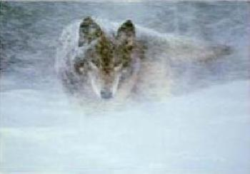 Bradley Parrish Storm Runner