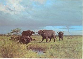 Owen Gromme Stormy Day - Serengeti Buffalo