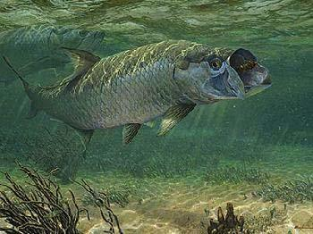 Mark Susinno Strike - Tarpon