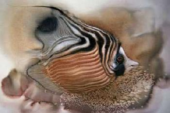 Lee Bogle Striped Butterfly Fish Giclee on Paper