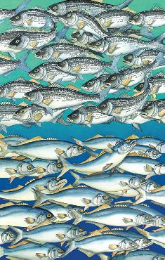 Kathy Johnston English Stripers and Blues Giclee on Museum Paper