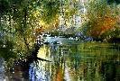 Nita Engle Summer River