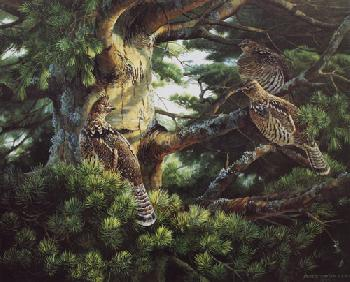 Persis Clayton Weirs Sunlit Pine - Ruffed Grouse