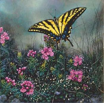 Stephen Lyman Swallowtail Butterfly and Pink Mountain Heather Giclee on Canvas on Board