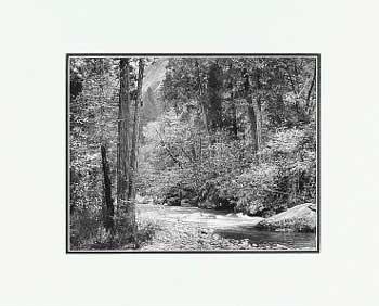 Ansel Adams Tenaya Creek, Dogwood, Rain LG Matted