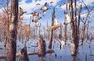 David Maass Timber Hole Mallards
