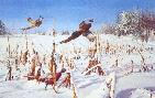 David Maass Touch of Winter Pheasants