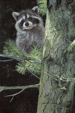 Susan Yoder Treetop Bandit Giclee on Museum Paper
